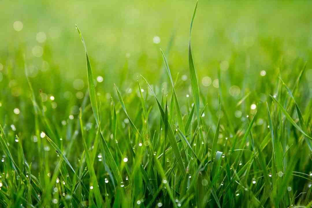 Comment arrêter l'accumulation d'herbe sous une tondeuse